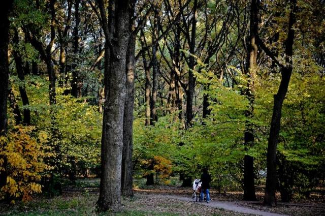 Активные граждане выберут график сбора осенней листвы